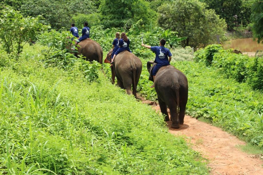 Travel Thailand Chiang Mai Elephant Park